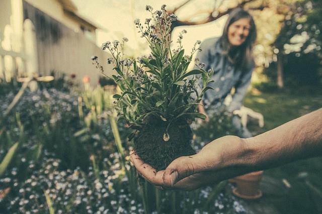 výsadba v zahradnictví